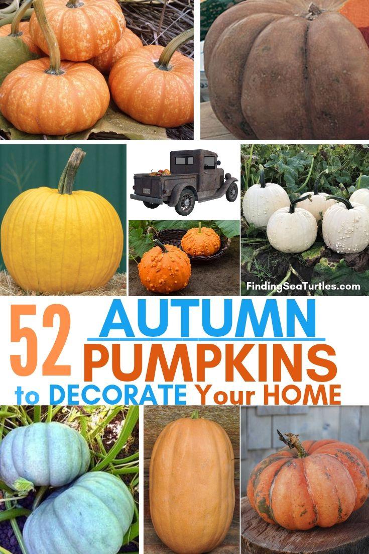 52 AUTUMN PUMPKINS To Decorate Your Home #Pumpkin #Pumpkins #GrowPumpkins #Garden #Gardening #FallDecor #FallGarden #FallSquash #AutumnDecor #FallHarvest #Halloween