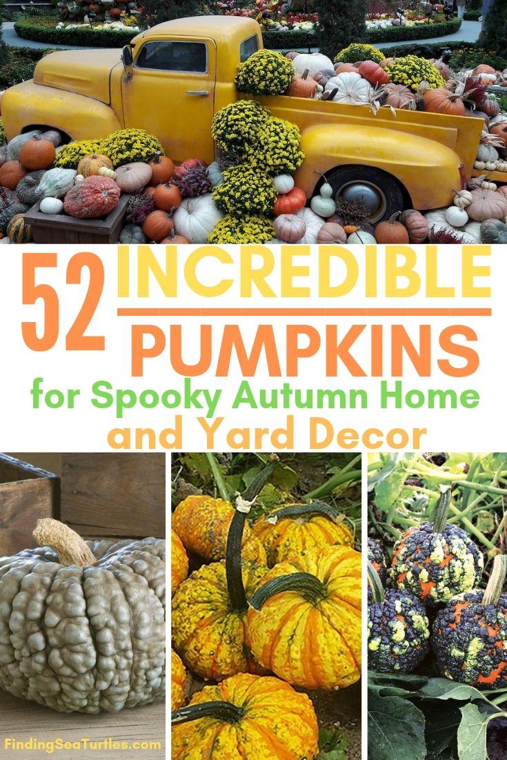 52 INCREDIBLE PUMPKINS For Spooky Autumn Home Yard Decor #Pumpkin #Pumpkins #GrowPumpkins #Garden #Gardening #FallDecor #FallGarden #FallSquash #AutumnDecor #FallHarvest #Halloween