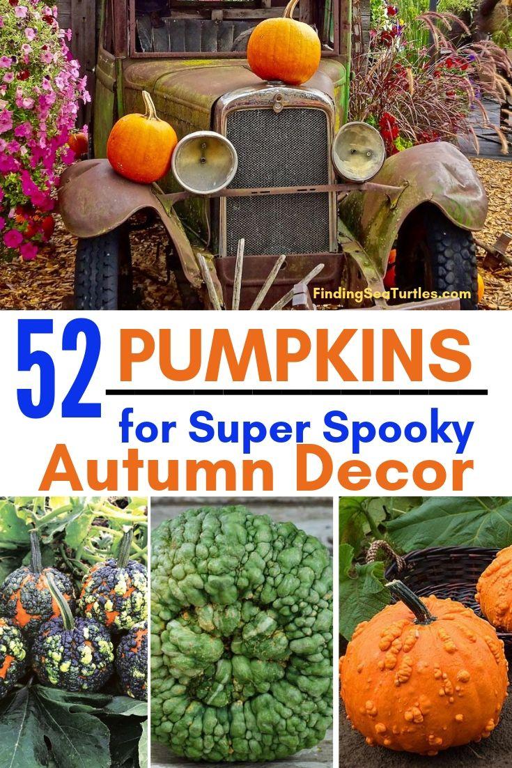 52 PUMPKINS For Super Spooky Autumn Decor #Pumpkin #Pumpkins #GrowPumpkins #Garden #Gardening #FallDecor #FallGarden #FallSquash #AutumnDecor #FallHarvest #Halloween