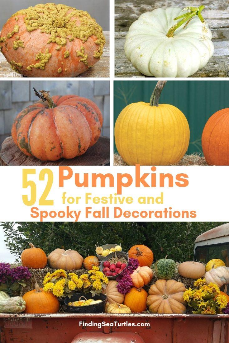 52 Pumpkins For Festive Spooky Fall Decorations #Pumpkin #Pumpkins #GrowPumpkins #Garden #Gardening #FallDecor #FallGarden #FallSquash #AutumnDecor #FallHarvest #Halloween