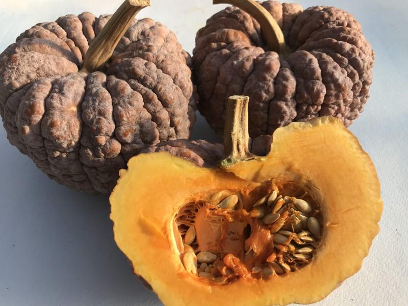 52 Types of Pumpkins to Eat, Decorate, and Display Black Futsu Squash #Pumpkin #Pumpkins #GrowPumpkins #Garden #Gardening #FallDecor #FallGarden #FallSquash #AutumnDecor #FallHarvest #Halloween