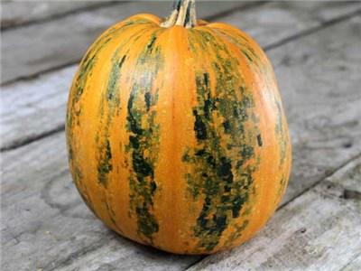 52 Types of Pumpkins to Eat, Decorate, and Display Kakai Squash Pumpkin #Pumpkin #Pumpkins #GrowPumpkins #Garden #Gardening #FallDecor #FallGarden #FallSquash #AutumnDecor #FallHarvest #Halloween