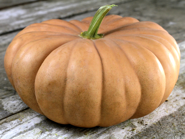 52 Types of Pumpkins to Eat, Decorate, and Display Long Island Cheese Squash #Pumpkin #Pumpkins #GrowPumpkins #Garden #Gardening #FallDecor #FallGarden #FallSquash #AutumnDecor #FallHarvest #Halloween