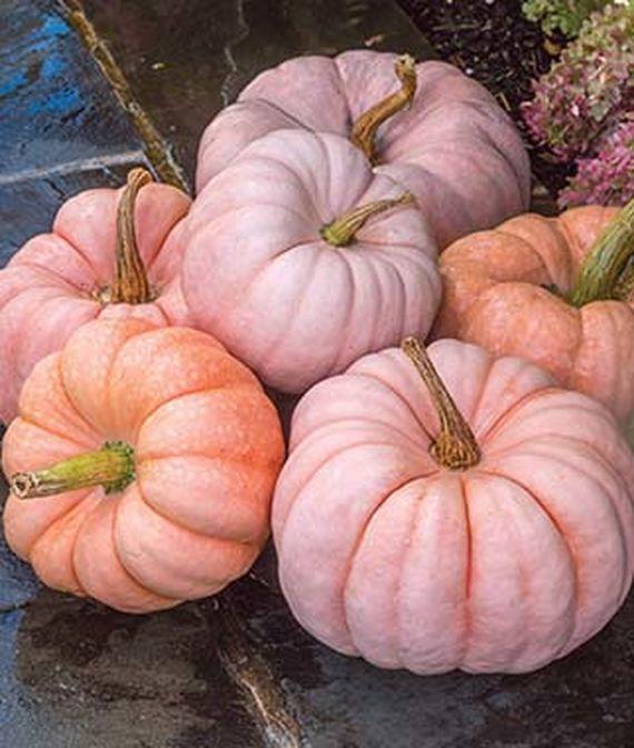 52 Types of Pumpkins to Eat, Decorate, and Display Porcelain Princess Hybrid Pumpkin #Pumpkin #Pumpkins #GrowPumpkins #Garden #Gardening #FallDecor #FallGarden #FallSquash #AutumnDecor #FallHarvest #Halloween