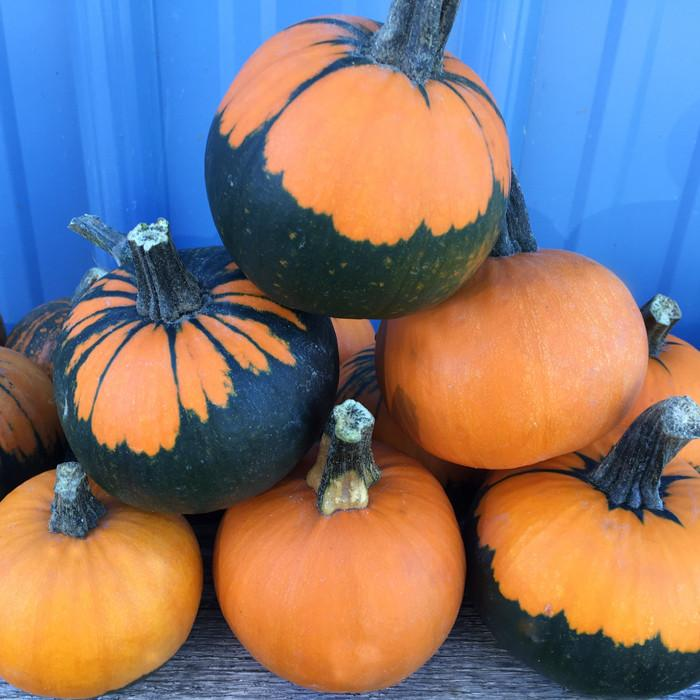 52 Types of Pumpkins to Eat, Decorate, and Display Pumpkin Batwing #Pumpkin #Pumpkins #GrowPumpkins #Garden #Gardening #FallDecor #FallGarden #FallSquash #AutumnDecor #FallHarvest #Halloween