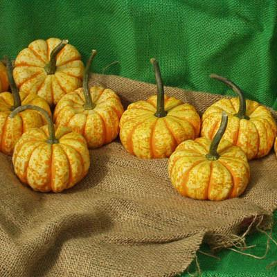 Types of Pumpkins to Eat, Decorate, and Display Pumpkin Hooligan #Pumpkin #Pumpkins #GrowPumpkins #Garden #Gardening #FallDecor #FallGarden #FallSquash #AutumnDecor #FallHarvest #Halloween