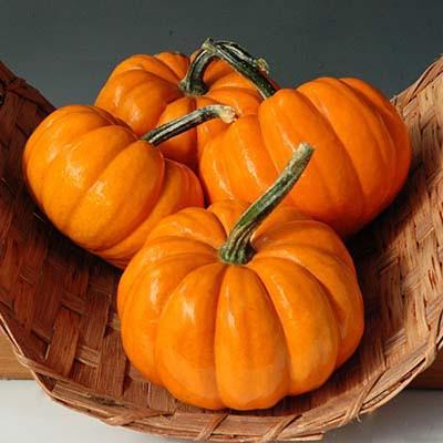 52 Types of Pumpkins to Eat, Decorate, and Display Pumpkin Orangita #Pumpkin #Pumpkins #GrowPumpkins #Garden #Gardening #FallDecor #FallGarden #FallSquash #AutumnDecor #FallHarvest #Halloween