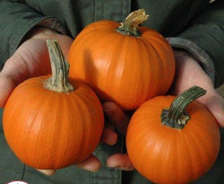 Types of Pumpkins to Eat, Decorate, and Display Pumpkin Wee Be Little #Pumpkin #Pumpkins #GrowPumpkins #Garden #Gardening #FallDecor #FallGarden #FallSquash #AutumnDecor #FallHarvest #Halloween
