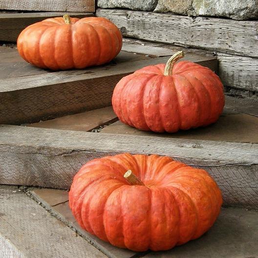 52 Types of Pumpkins to Eat, Decorate, and Display Red Etampes Pumpkin #Pumpkin #Pumpkins #GrowPumpkins #Garden #Gardening #FallDecor #FallGarden #FallSquash #AutumnDecor #FallHarvest #Halloween