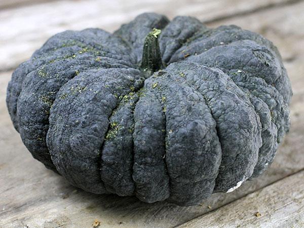 52 Types of Pumpkins to Eat, Decorate, and Display Thai Kang Kob Pumpkin #Pumpkin #Pumpkins #GrowPumpkins #Garden #Gardening #FallDecor #FallGarden #FallSquash #AutumnDecor #FallHarvest #Halloween