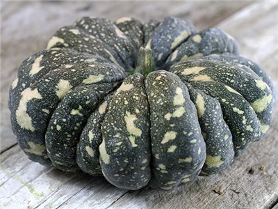 52 Types of Pumpkins to Eat, Decorate, and Display Thai Rai Kaw Tok Pumpkin #Pumpkin #Pumpkins #GrowPumpkins #Garden #Gardening #FallDecor #FallGarden #FallSquash #AutumnDecor #FallHarvest #Halloween