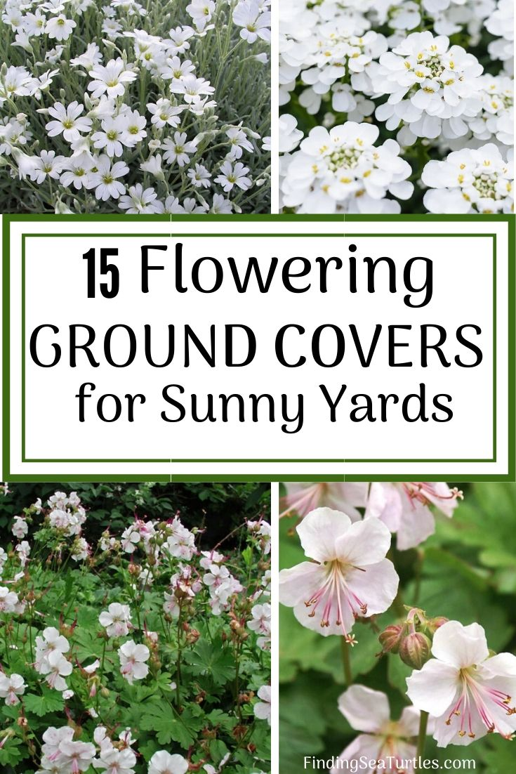 15 Flowering Ground Covers for Sunny Yards #Perennials #Garden #Gardening #Groundcovers #SunLovingGroundcovers #Landscaping #PlantsforSlopes #PlantsforBanks #PlantsforStoneWalls