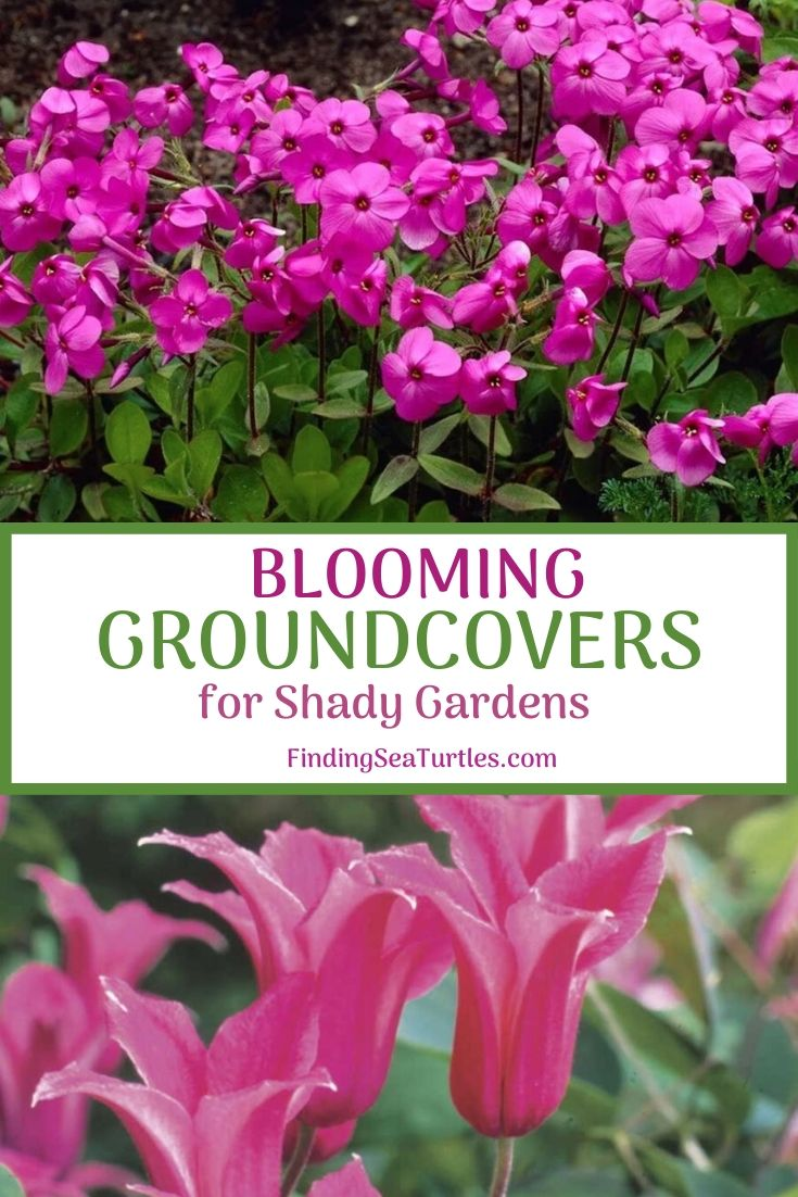 BLOOMING Ground Covers for Shady Gardens #Perennials #Garden #Gardening #GroundCovers #ShadeLovingGroundCovers #Landscaping