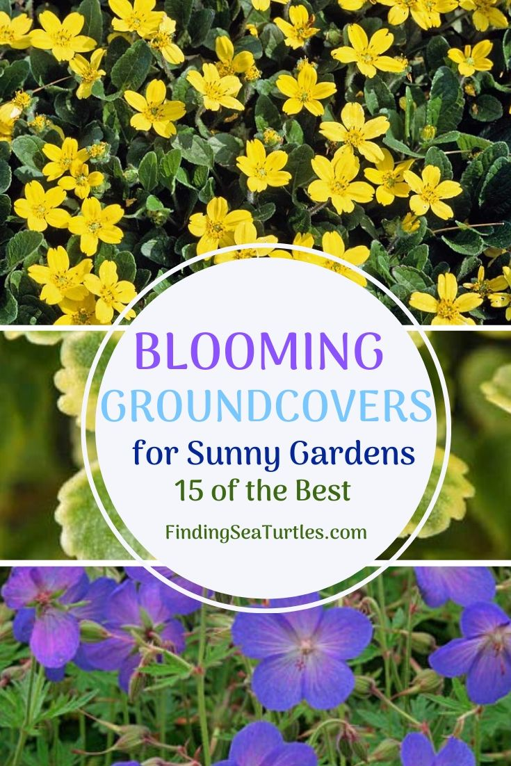 BLOOMING Groundcovers for Sunny Gardens 15 of the Best #Perennials #Garden #Gardening #Groundcovers #SunLovingGroundcovers #Landscaping #PlantsforSlopes #PlantsforBanks #PlantsforStoneWalls