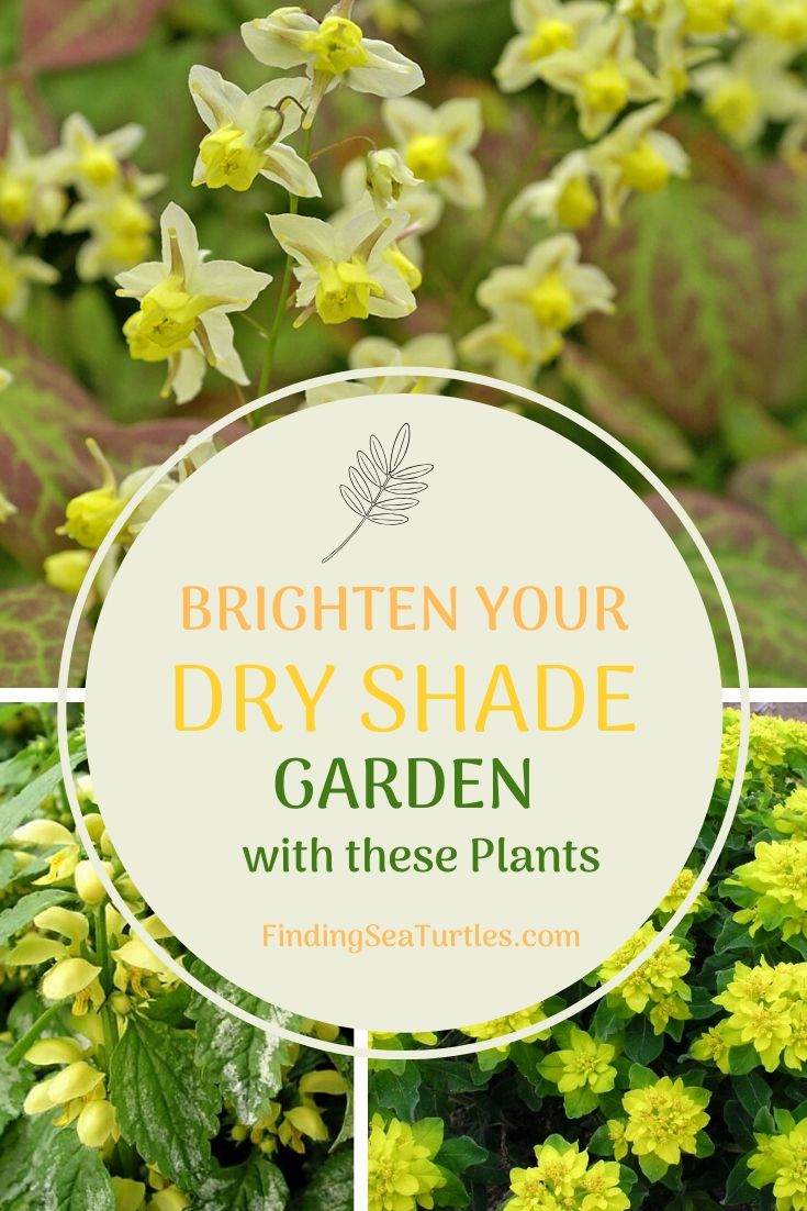 BRIGHTEN YOUR DRY SHADE GARDEN with these plants #Perennials #Garden #Gardening #DryShadePerennials #ShadeLovingPerennials #DryShadeLovingPlants #Landscaping