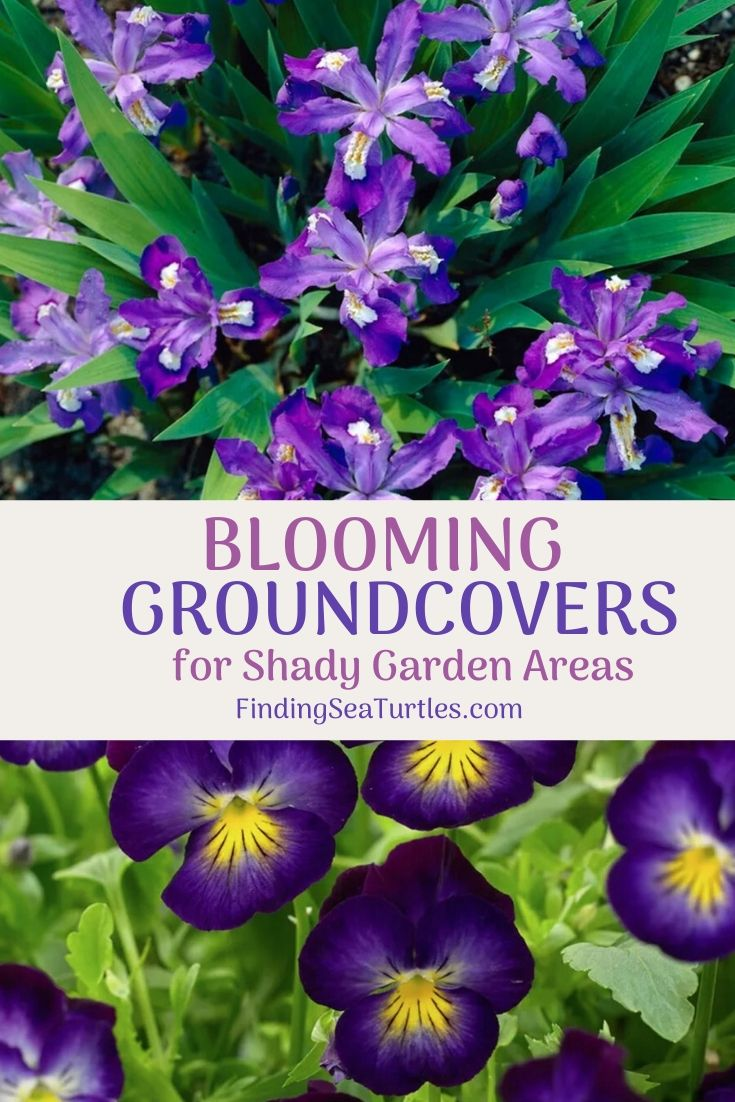 Blooming GROUND COVERS for Shady Garden Areas #Perennials #Garden #Gardening #GroundCovers #ShadeLovingGroundCovers #Landscaping