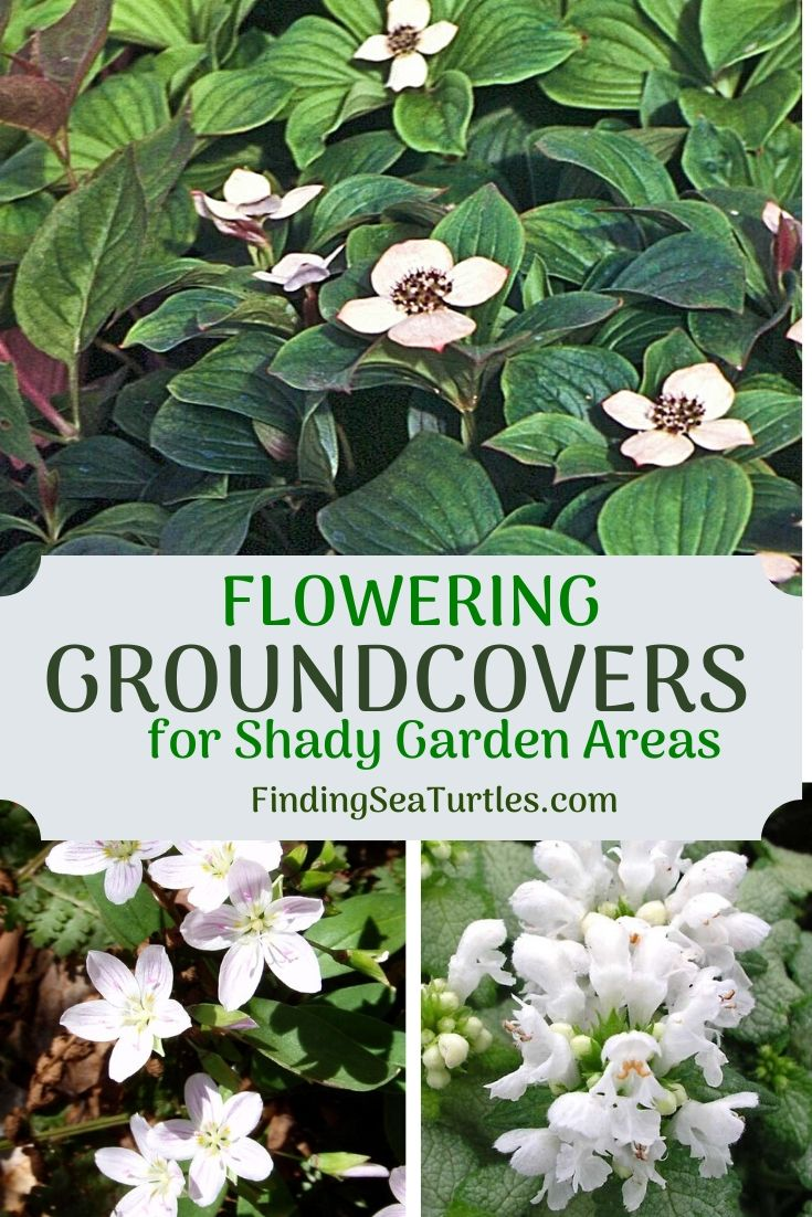FLOWERING GROUND COVERS for Shady Garden Areas #Perennials #Garden #Gardening #GroundCovers #ShadeLovingGroundCovers #Landscaping