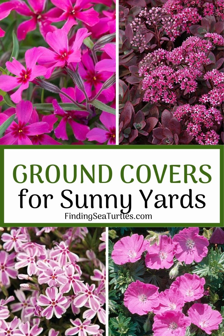 GROUND COVERS for Sunny Yards #Perennials #Garden #Gardening #Groundcovers #SunLovingGroundcovers #Landscaping #PlantsforSlopes #PlantsforBanks #PlantsforStoneWalls
