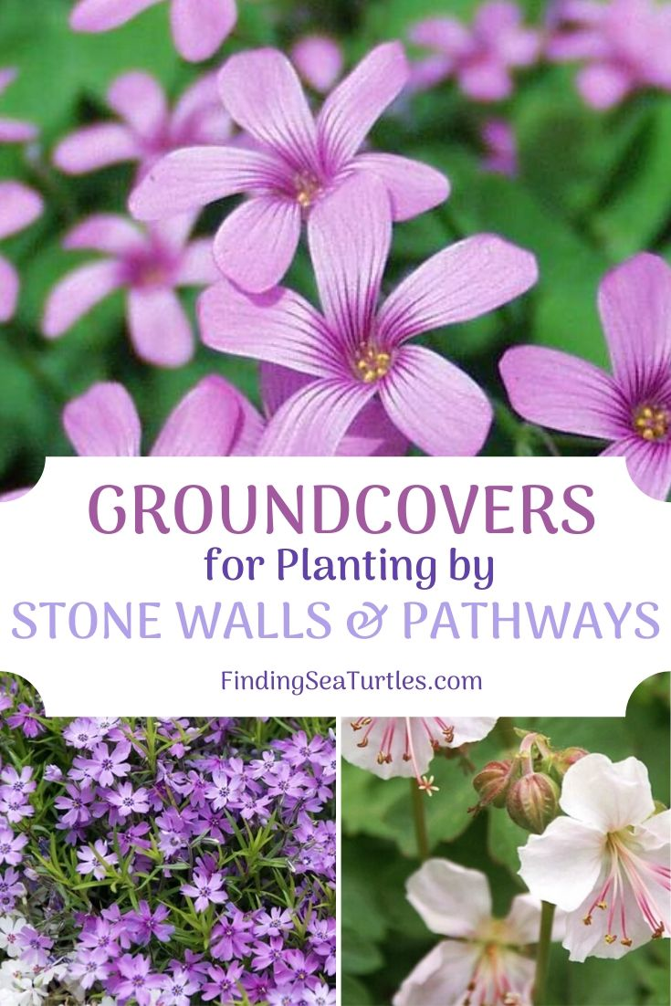 GROUNDCOVERS for Planting by Stone Walls Pathways #Perennials #Garden #Gardening #Groundcovers #SunLovingGroundcovers #Landscaping #PlantsforSlopes #PlantsforBanks #PlantsforStoneWalls