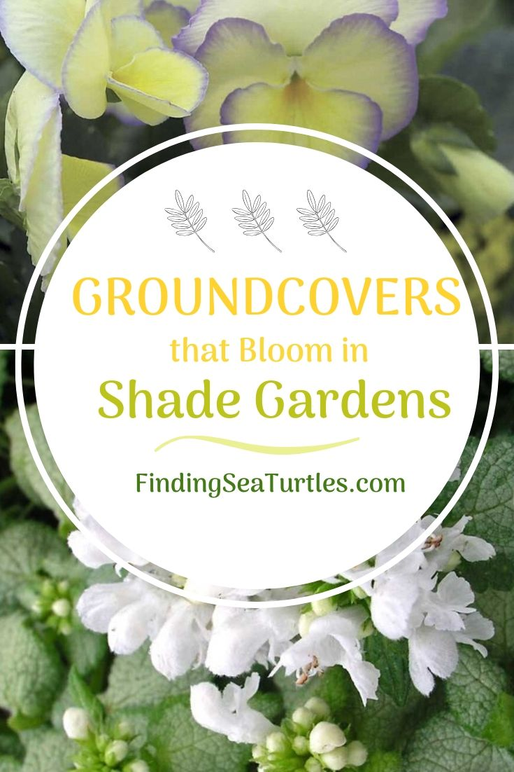 GROUND COVERS that Bloom in Shade Gardens #Perennials #Garden #Gardening #GroundCovers #ShadeLovingGroundCovers #Landscaping