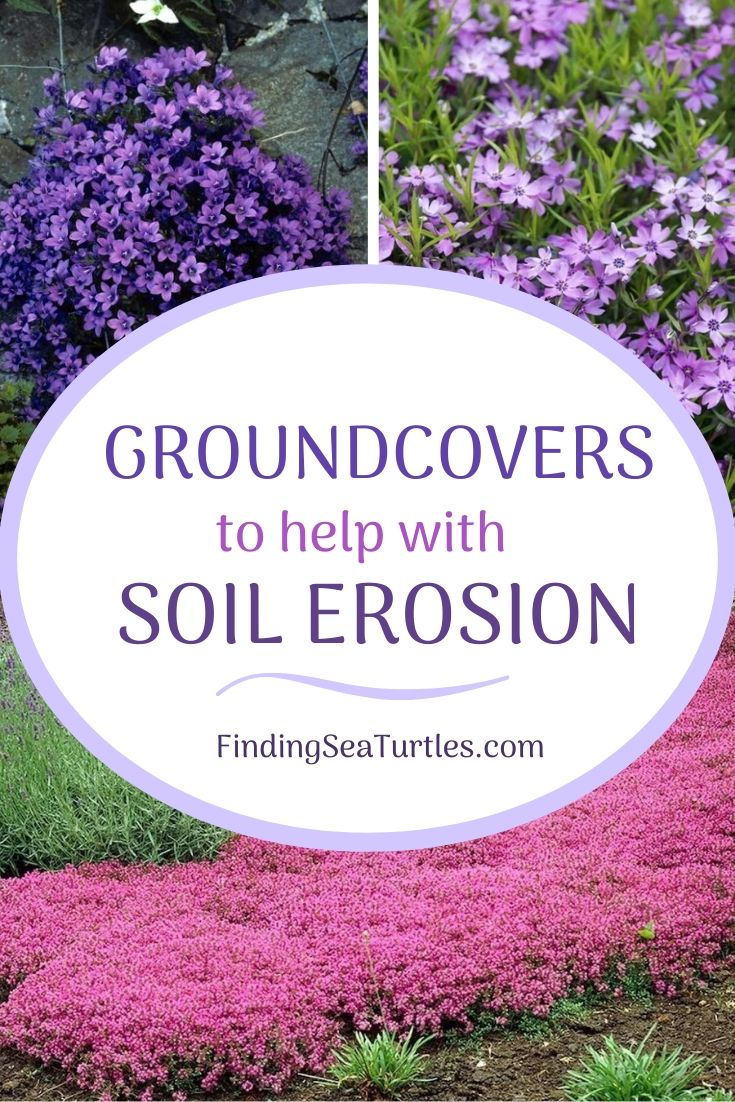 GROUNDCOVERS to help with Soil Erosion #Perennials #Garden #Gardening #Groundcovers #SunLovingGroundcovers #Landscaping #PlantsforSlopes #PlantsforBanks #PlantsforStoneWalls