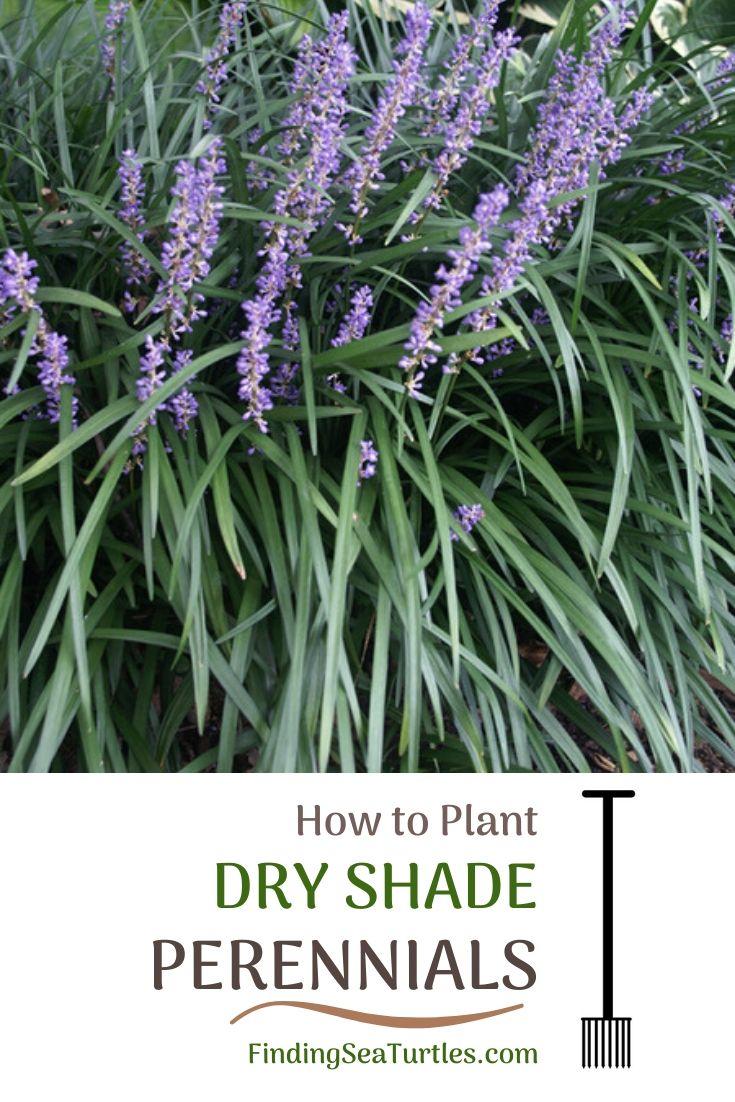 How to Plant Dry Shade Perennials Fork #Perennials #PlantingTips #Garden #Gardening #DryShadePerennials #ShadeLovingPerennials #DryShadeLovingPlants #Landscaping