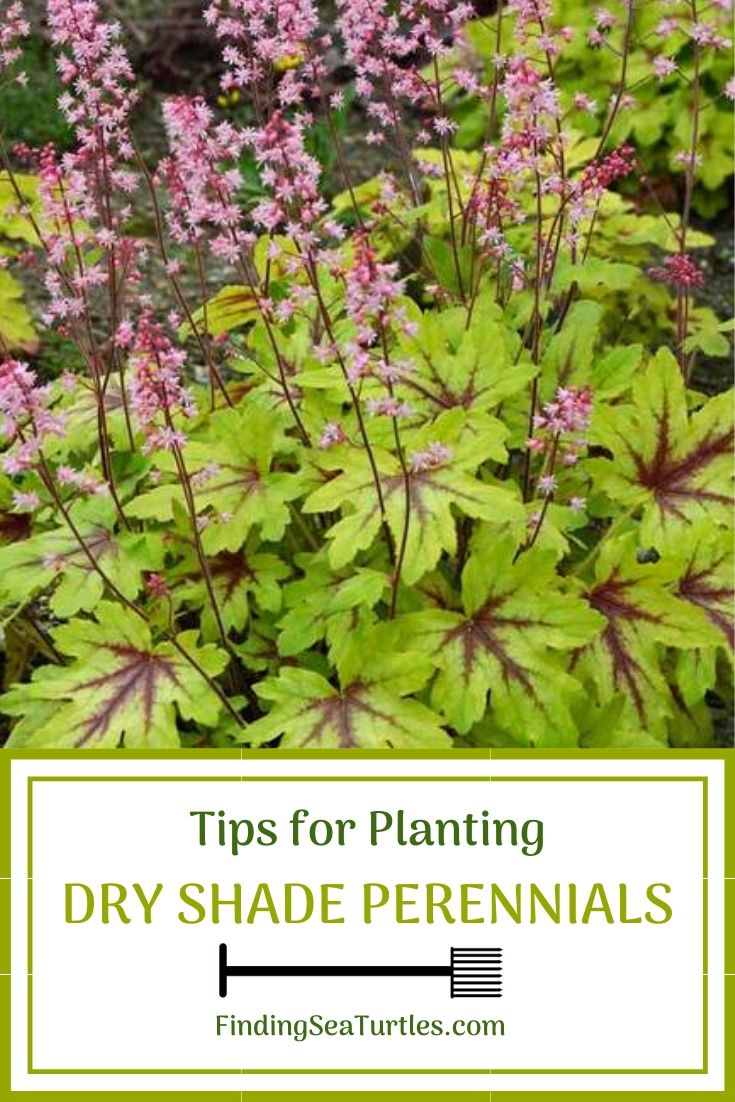 Tips for Planting Dry Shade Perennials #Perennials #PlantingTips #Garden #Gardening #DryShadePerennials #ShadeLovingPerennials #DryShadeLovingPlants #Landscaping