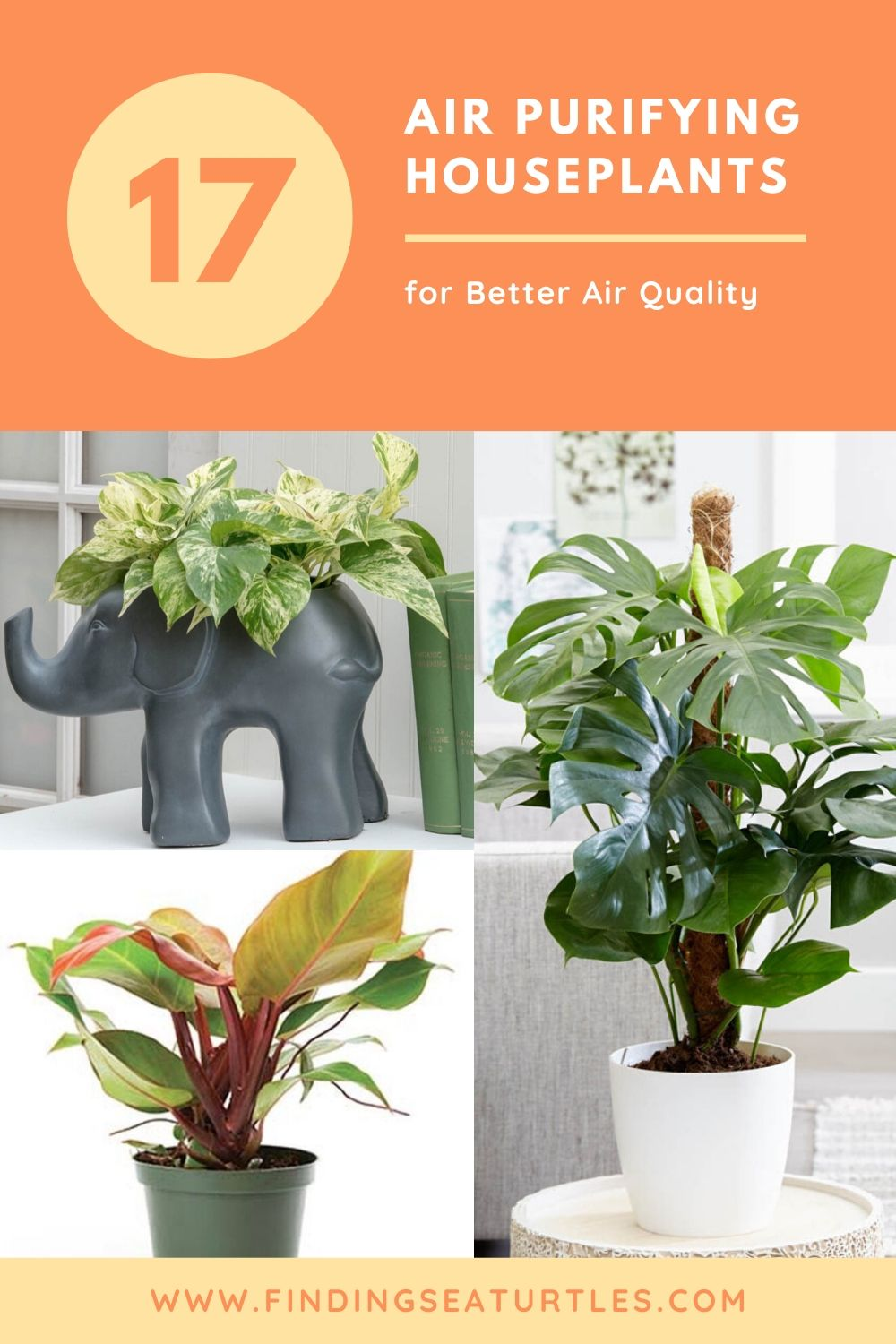17 AIR Purifying Houseplants for Better Air Quality #HousePlants #AirCleaningPlants #AirPurifyingPlants #AirPurifyingHousePlants #IndoorPlants #CleanAir