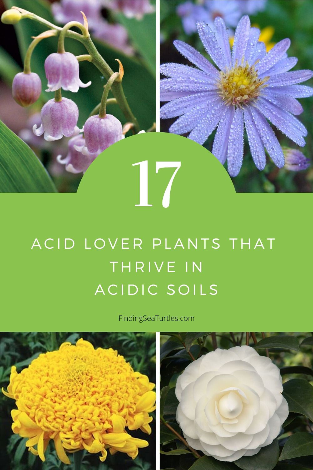 17 Acid Lover Plants that Thrive in Acidic Soils #Perennials #AcidLovingPerennials #AcidLovingPlants #Gardening #AcidicSoil