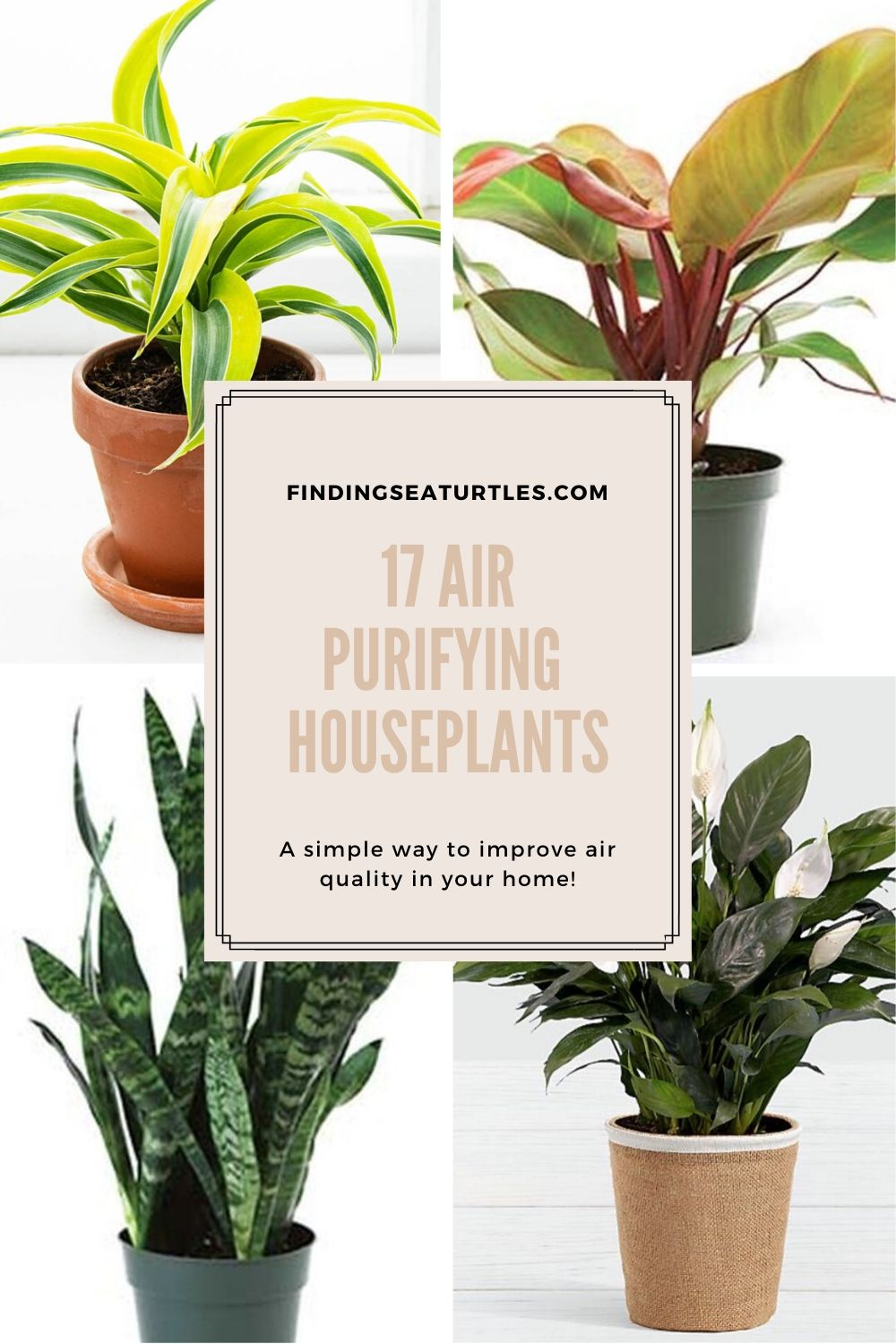17 Air Purifying Houseplants A simple way to improve air quality in your home #HousePlants #AirCleaningPlants #AirPurifyingPlants #AirPurifyingHousePlants #IndoorPlants #CleanAir