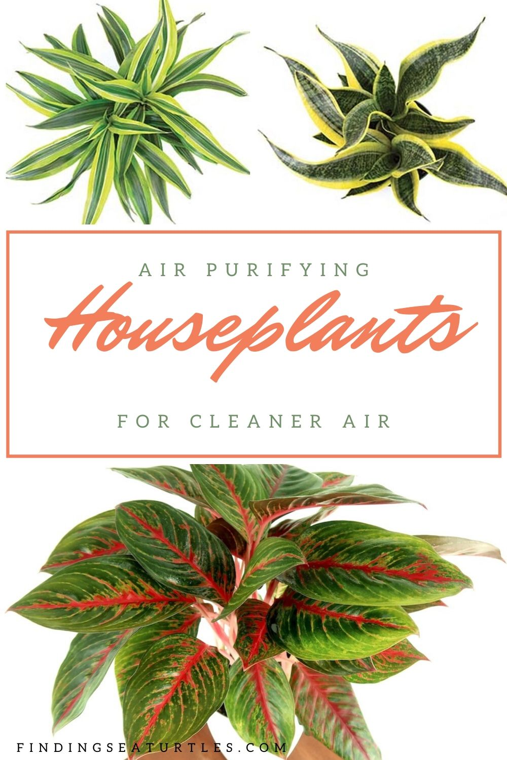 Air purifying Houseplants for Cleaner Air #HousePlants #AirCleaningPlants #AirPurifyingPlants #AirPurifyingHousePlants #IndoorPlants #CleanAir