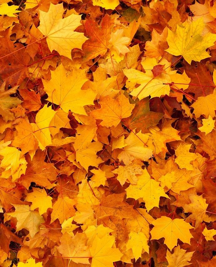 How to Make Leaf Mold
