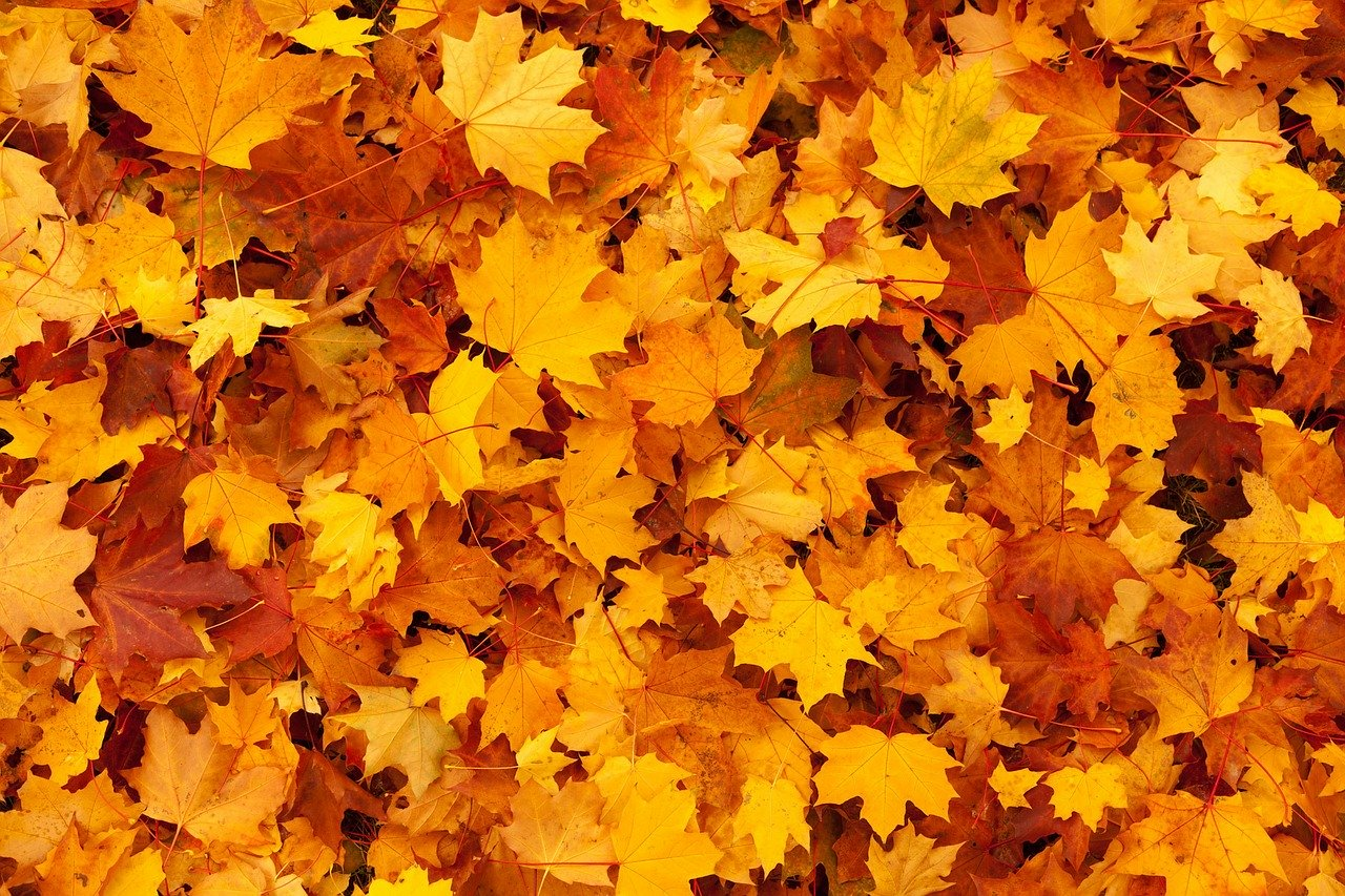 DIY Leaf mold Autumn Leaves #LeafMould #LeafMold #Gardening #SoilAmendments #SoilImprovement #Compost #OrganicMatter