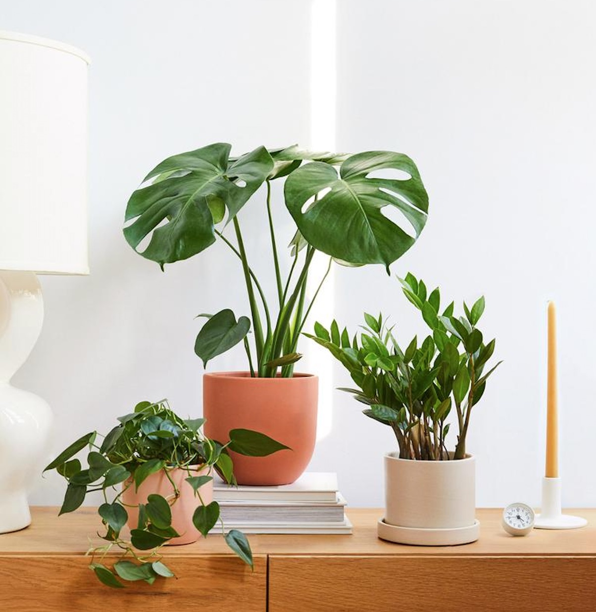 Benefits of Indoor Plants #HousePlants #AirCleaningPlants #AirPurifyingPlants #AirPurifyingHousePlants #IndoorPlants #CleanAir