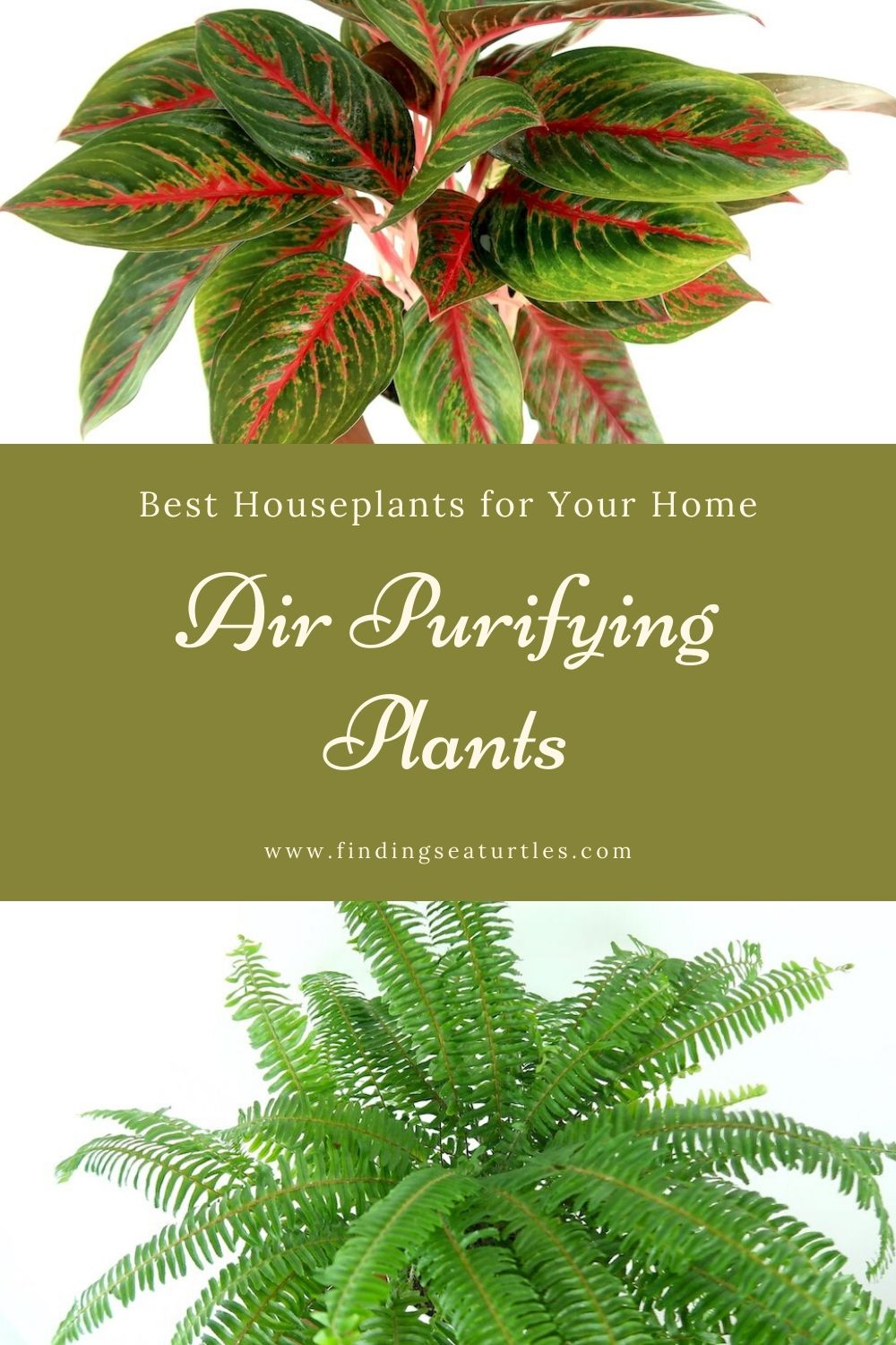 Best Houseplants for Your Home Air Purifying Plants #HousePlants #AirCleaningPlants #AirPurifyingPlants #AirPurifyingHousePlants #IndoorPlants #CleanAir