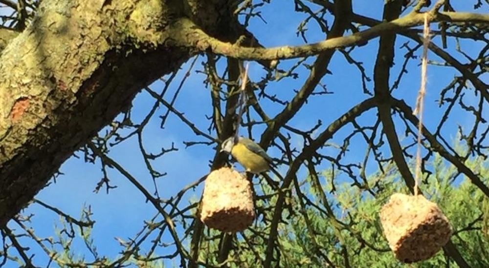 Blissful Domestication #FeedTheBirds #BirdFood #FeedWildBirds #Gardening #Wildbirds #DIY #DIYBirdFood #BirdCakes