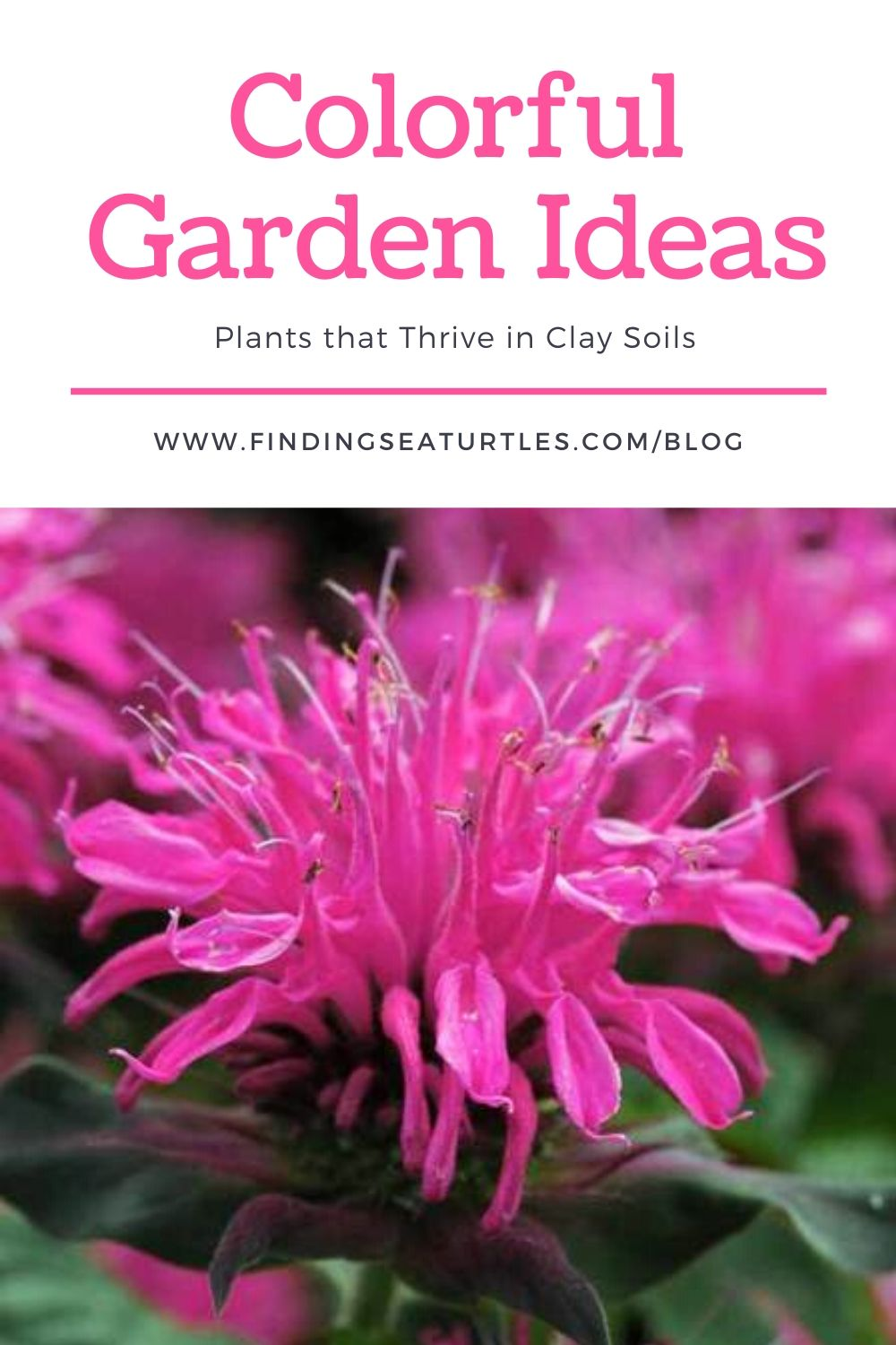 COLORFUL Garden Ideas Plants that Thrive in Clay Soils #Perennials #ClayTolerantPerennials #PlantsThatThriveinClay #Gardening #ClaySoil #TolerantofClaySoils