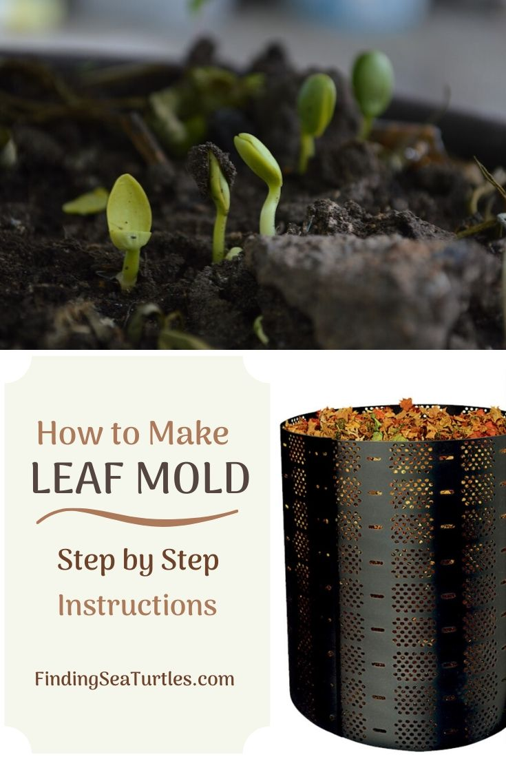 How to Make Leaf Mold Step by Step Instructions #LeafMould #LeafMold #Gardening #SoilAmendments #SoilImprovement #Compost #OrganicMatter