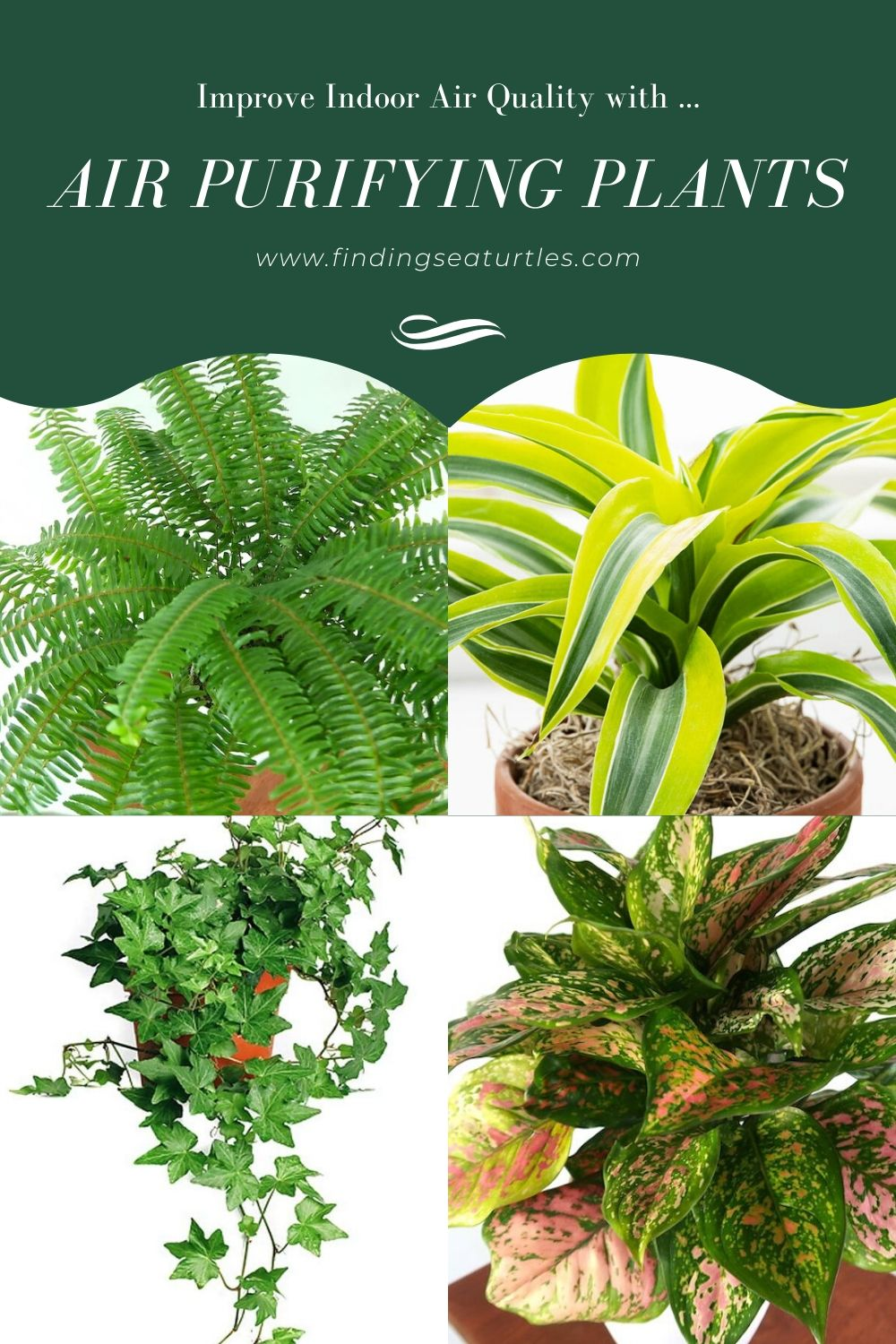 Improve Indoor Air Quality with Air Purifying Plants #HousePlants #AirCleaningPlants #AirPurifyingPlants #AirPurifyingHousePlants #IndoorPlants #CleanAir