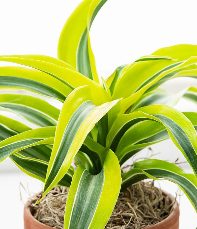 Air Purifying Plants for the Home