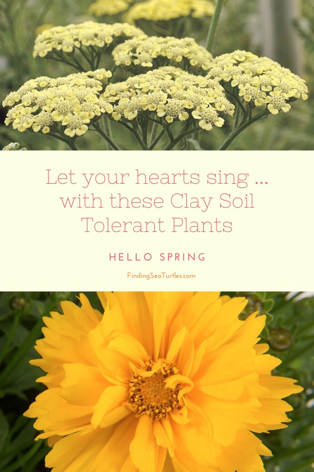 Let your hearts sing with these Clay Soil Tolerant Plants #Perennials #ClayTolerantPerennials #PlantsThatThriveinClay #Gardening #ClaySoil #TolerantofClaySoils