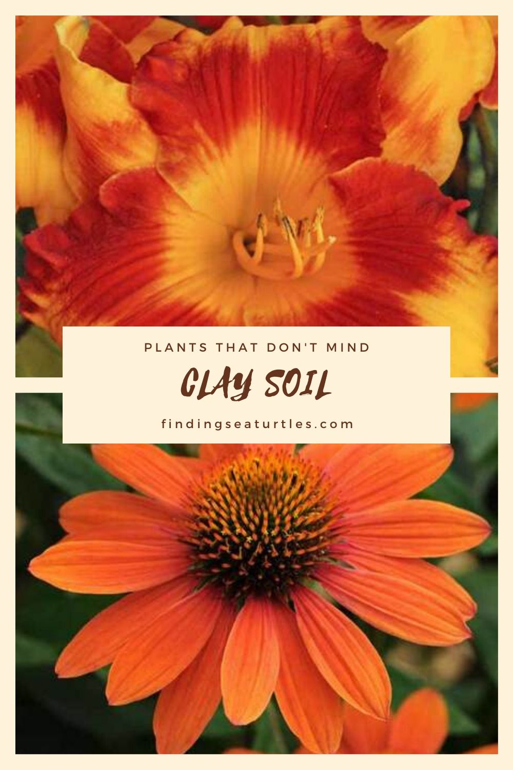 Plants that don't Mind Clay Soil #Perennials #ClayTolerantPerennials #PlantsThatThriveinClay #Gardening #ClaySoil #TolerantofClaySoils