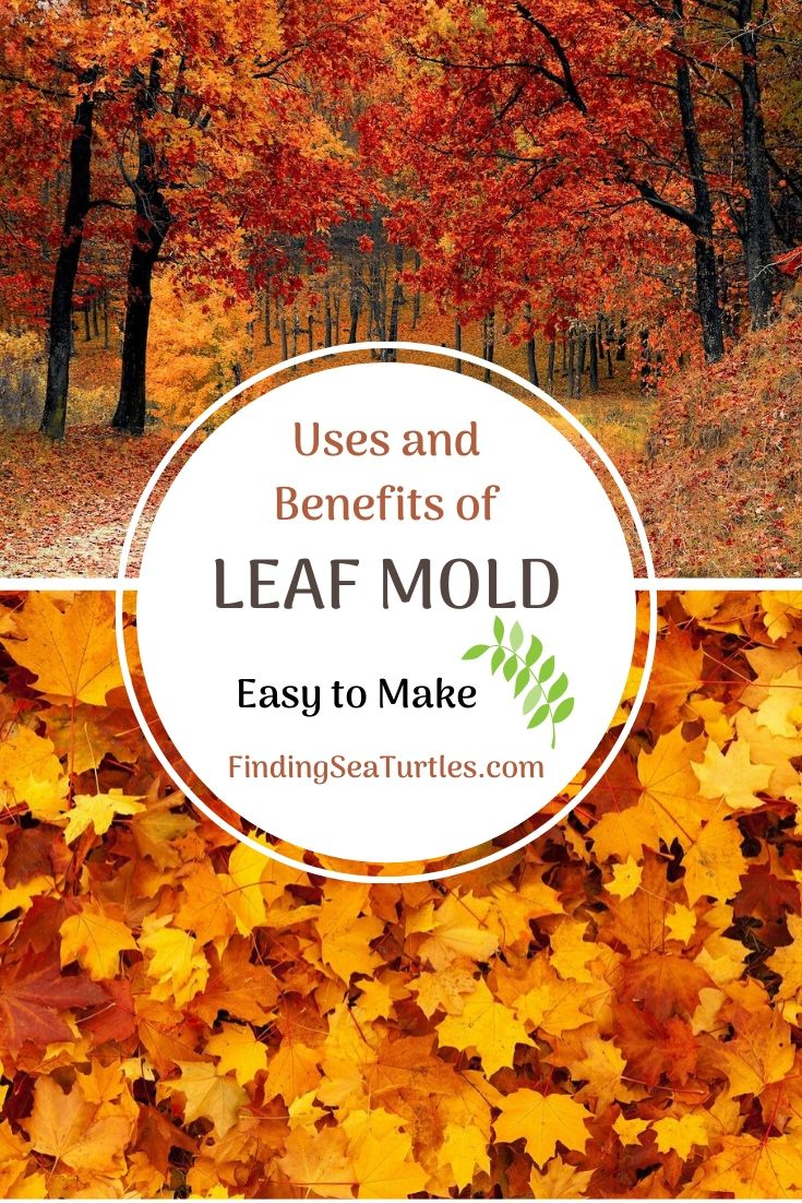Uses and Benefits of LEAF MOLD Easy to Make #LeafMould #LeafMold #Gardening #SoilAmendments #SoilImprovement #Compost #OrganicMatter