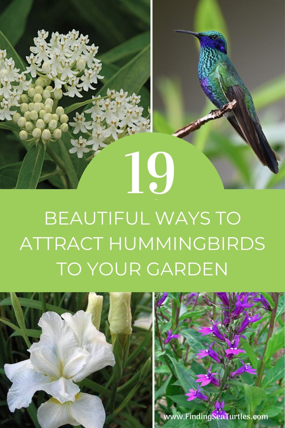 19 Beautiful Ways to Attract Hummingbirds to Your Garden #Hummingbirds #Garden #Gardening #Plants #GardenPollinators #AttractHummingbirds #NectarRichPlants #BeneficialForPollinators