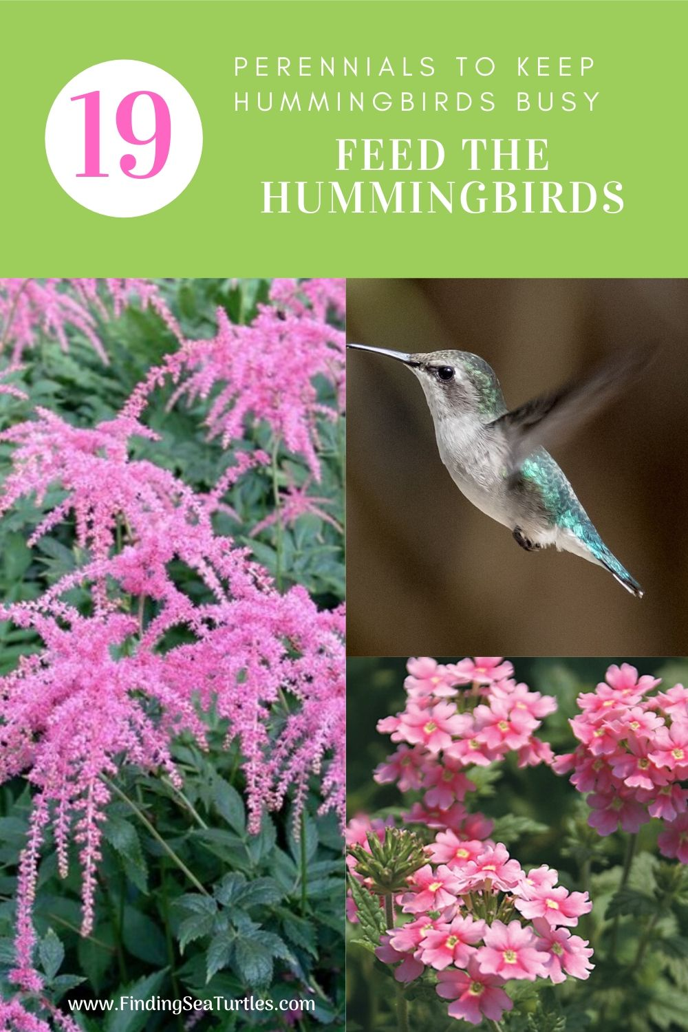 19 Perennials to keep Hummingbirds Busy Feed the Hummingbirds #Hummingbirds #Garden #Gardening #Plants #GardenPollinators #AttractHummingbirds #NectarRichPlants #BeneficialForPollinators