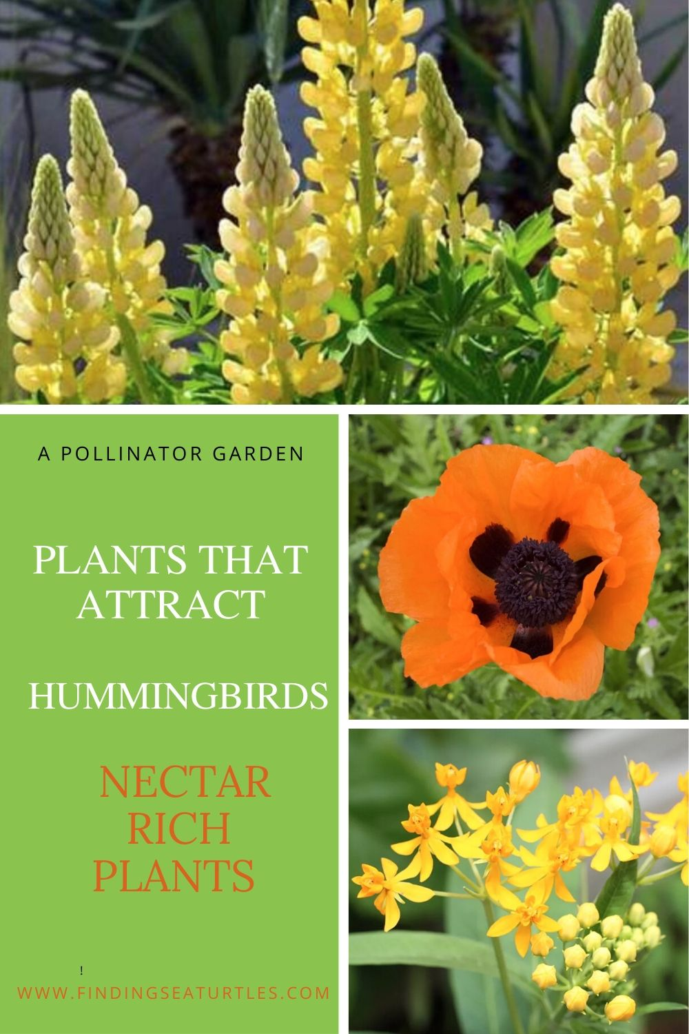 A Pollinator Garden Plants that Attract Hummingbirds #Hummingbirds #Garden #Gardening #Plants #GardenPollinators #AttractHummingbirds #NectarRichPlants #BeneficialForPollinators