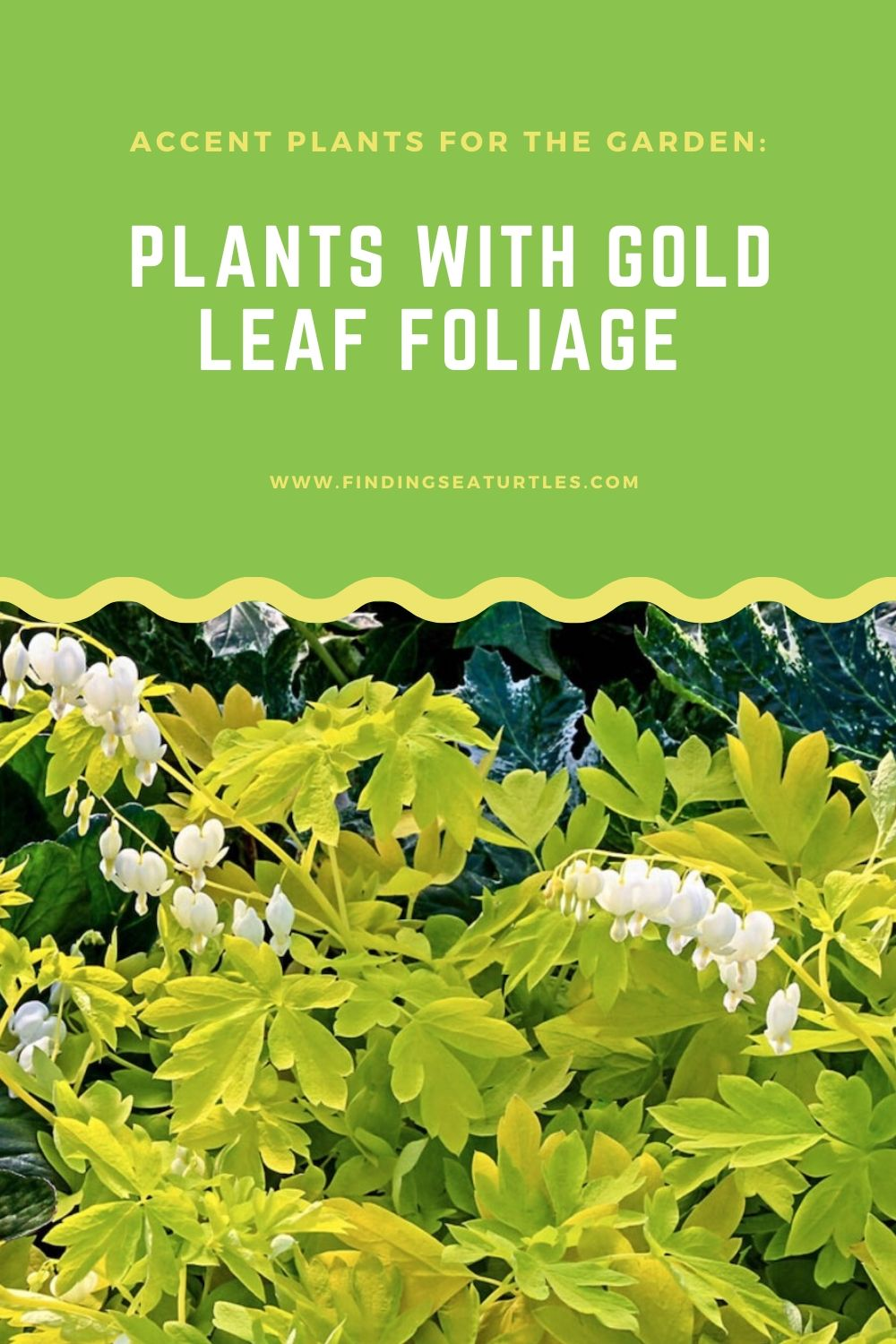ACCENT PLANTS FOR THE GARDEN PLANTS WITH GOLDEN LEAF FOLIAGE #GoldFoliage #PlantswithGoldLeaves #DramaticFoliagePlants #Gardening #Landscapes #GoldLeafPlants