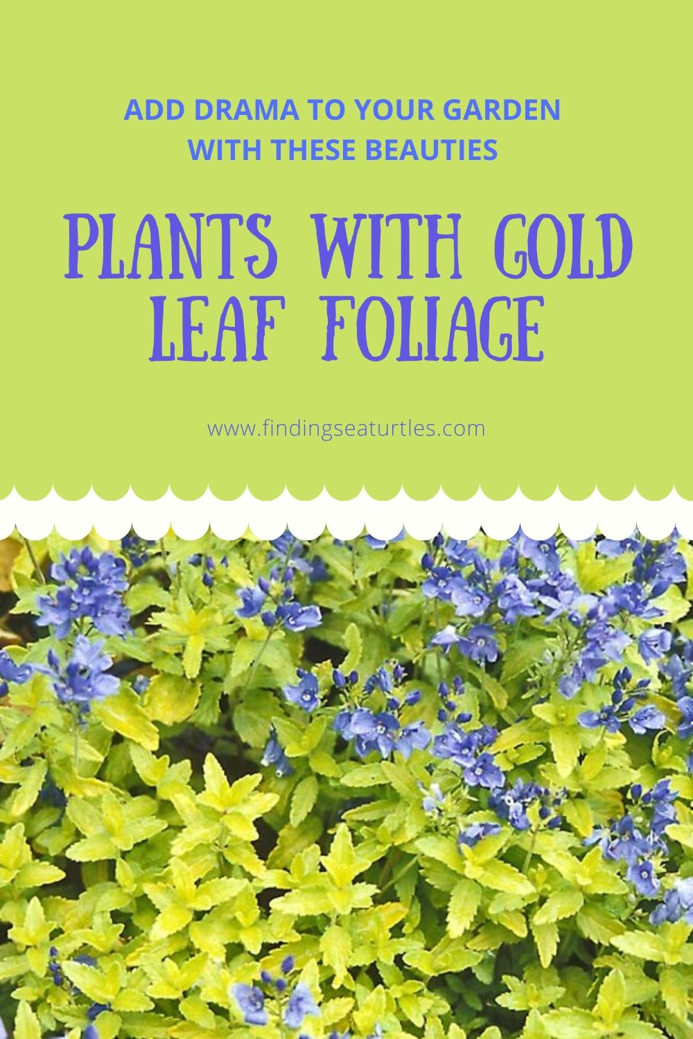 Add Drama to your Garden with These Beauties Plants with Gold Leaf Foliage #GoldFoliage #PlantswithGoldLeaves #DramaticFoliagePlants #Gardening #Landscapes #GoldLeafPlants