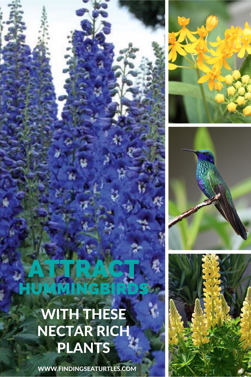 Attract Hummingbirds with these Nectar Rich Plants #Hummingbirds #Garden #Gardening #Plants #GardenPollinators #AttractHummingbirds #NectarRichPlants #BeneficialForPollinators
