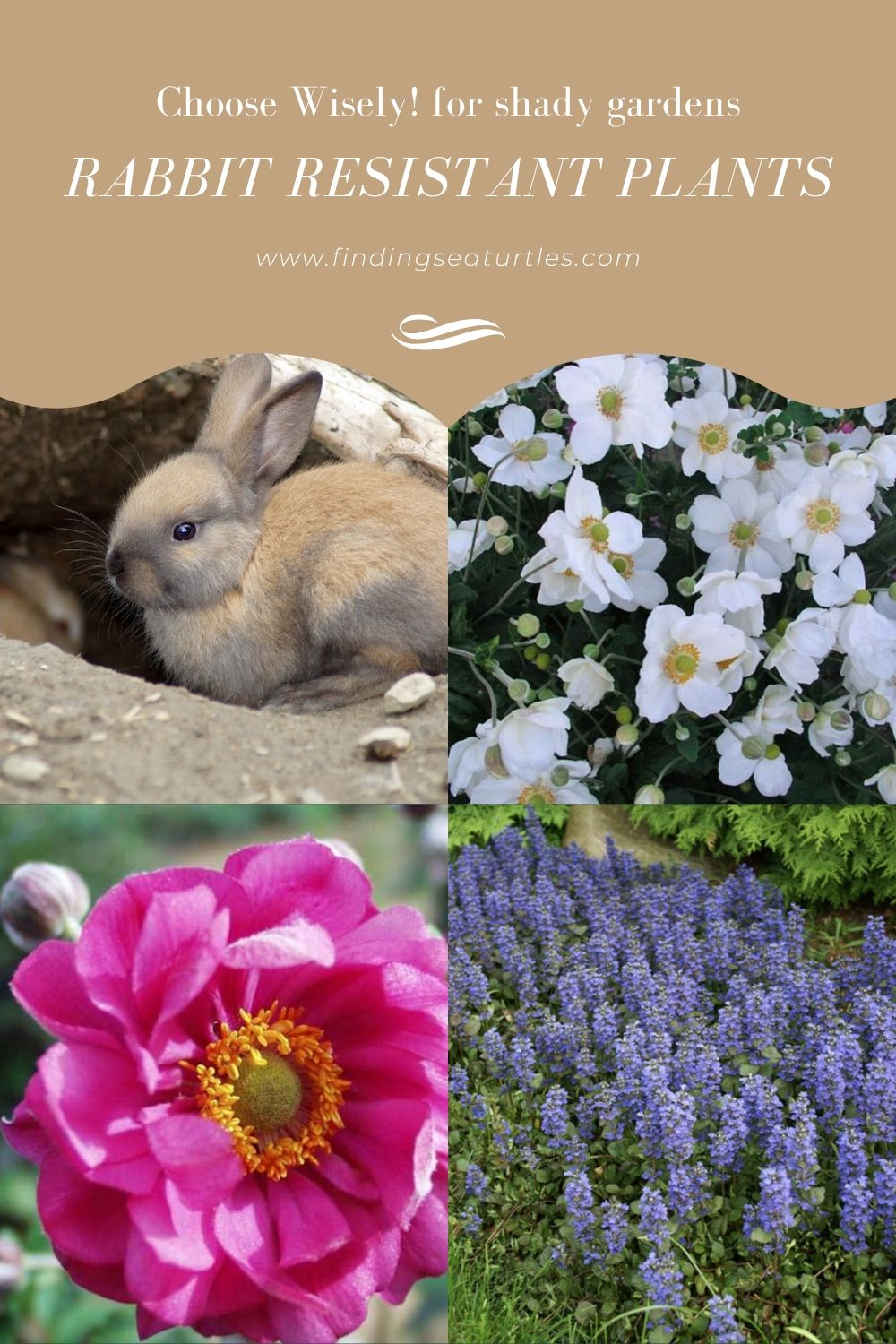 Choose Wisely for shady gardens Rabbit Resistant Plants #PollinatorPlants #RabbitResistant #PlantsResistanttoRabbits #PlantsforPollinators #Gardening #Perennials